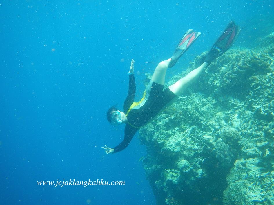 Berfoto dengan Ikan Cantik di Pulau Menjangan, Bali – Rasakan Sensasinya !