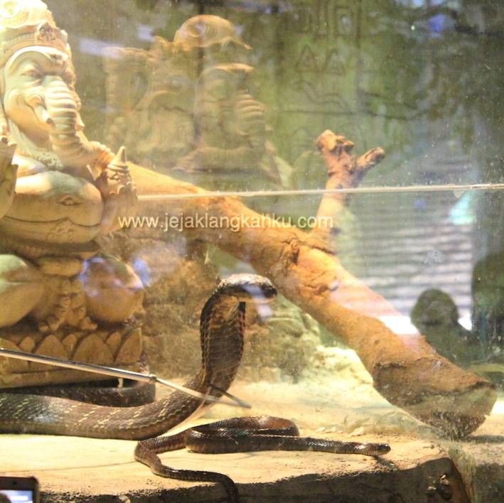 reptil jatimpark wisata batu