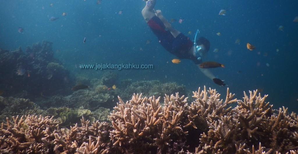 snorkeling pulau kayu angin genteng 6