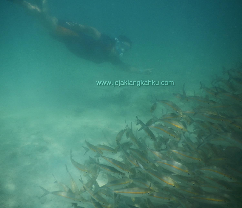 wisata gili snorkeling lombok