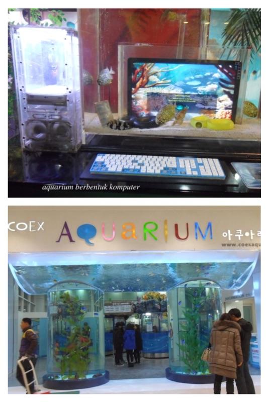 coex aquarium seoul 4