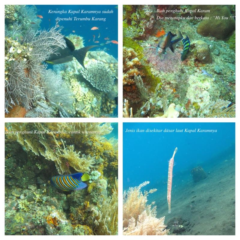 scuba diving tulamben bali 3