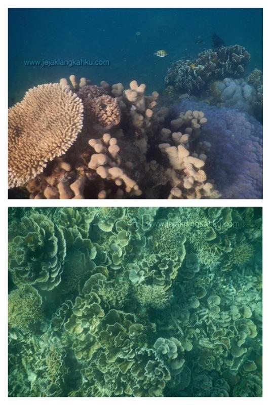 snorkeling pulau kayu genteng b