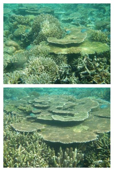 snorkeling pulau sepa c